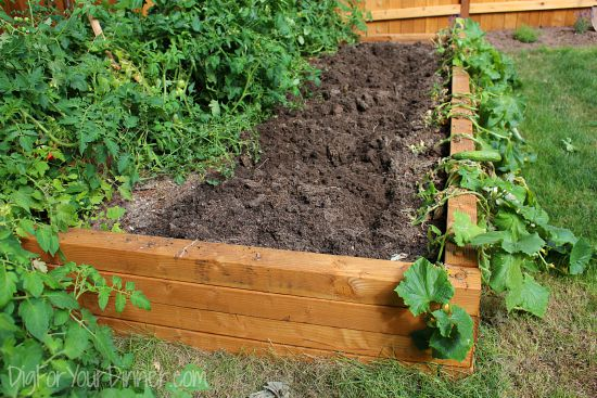 Kitchen Garden Tour and Happenings 8/9/15