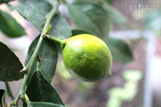 Oh Lemon!