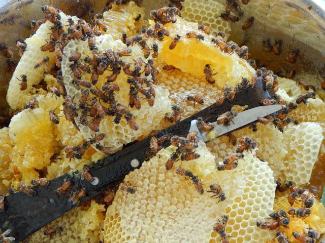 Jane's Bees