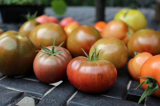 Dig For Your Dinner – Backyard Kitchen Garden Photos 9/20/15