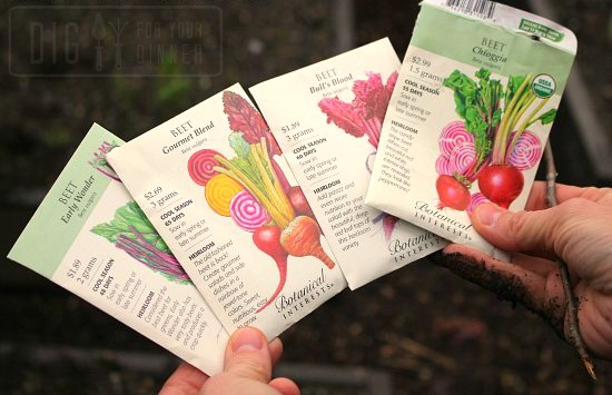 Planting Guide – Starting Beets from Seed