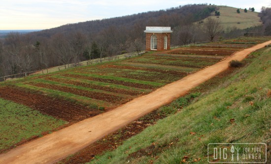 Thomas Jefferson's Monticello Winter Garden Tour