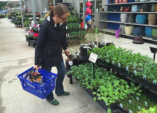 Shopping for Perennial Vegetables
