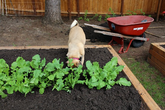 Ready, Set Plant!