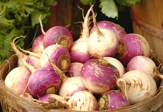 Planting Guide – Starting Turnips from Seed
