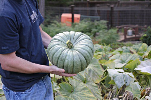 Planting Guide – Starting Pumpkins from Seed