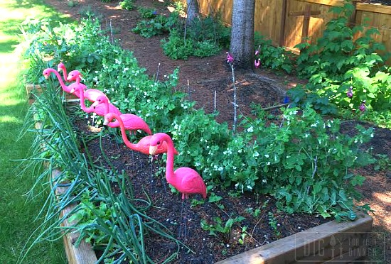 The HH Checks in with West Coast Garden Pictures