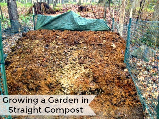 Reader Question:  Growing a Garden in Straight Compost
