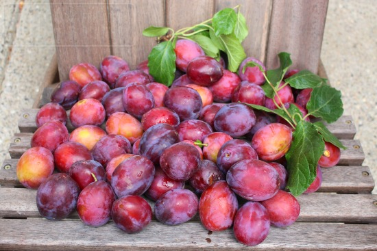 Recipe for Cinnamon Plum Jam
