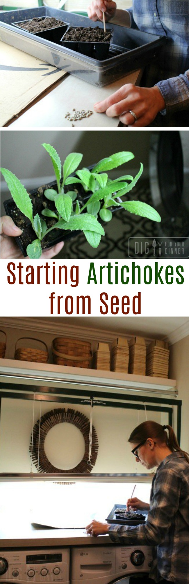 Planting Guide – Starting Artichokes from Seed