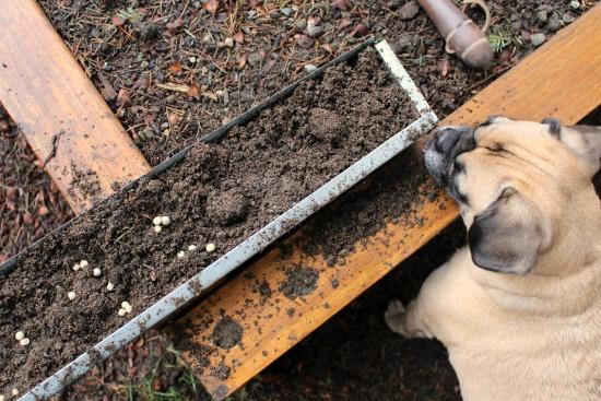 A Week in Garden Photos – March 13th – 19th