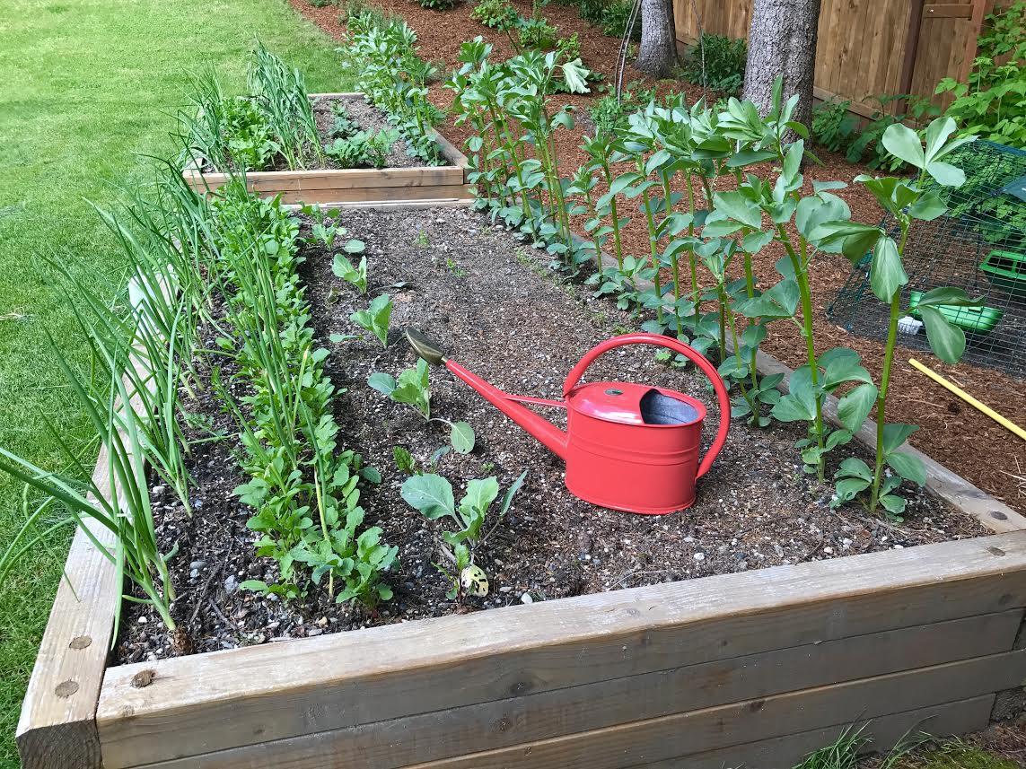 A Week in Garden Photos – May 15th– May 21